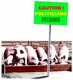 Politicians Feeding Pigs